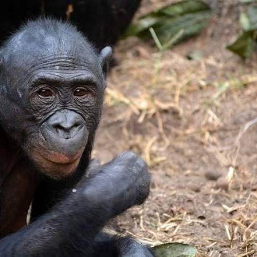 Il Parco Nazione Conkuati Douli in Congo